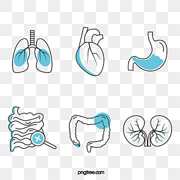 linear icon group diagram of medical treatment, Medical Care, Heart, Vectors PNG and Vector