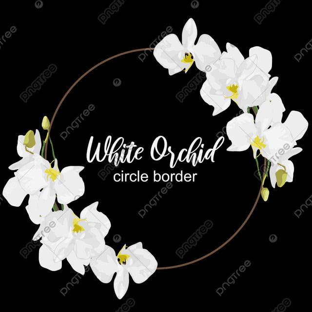 Orchidée Blanche Fleur Circle Frontière Aloha Art
