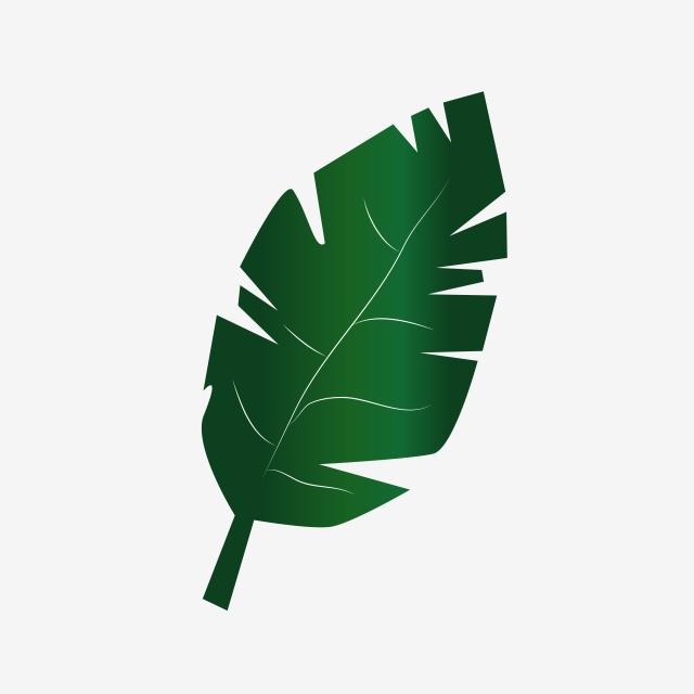 Feuilles Vertes Clipart Element De Vecteur Png Les Feuilles Floral Feuilles Florales Png Et Vecteur Pour Telechargement Gratuit