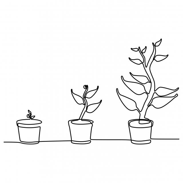 Phase De Croissance Des Plantes Continue Une Ligne Dessin