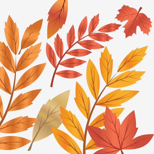 さまざまな種類の装飾セットのイラスト葉紅葉 イエロー オレンジ 11月画像素材の無料ダウンロードのためのpngとベクトル