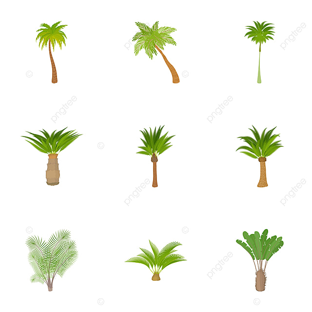 Palma Icons Set Cartoon Style, Palma, Icon, Vector PNG and Vector ...