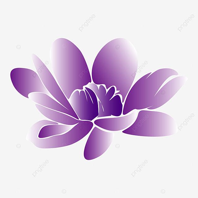 Illustration Dessin De Fleur De Lotus Pourpre Sur Fond Blanc