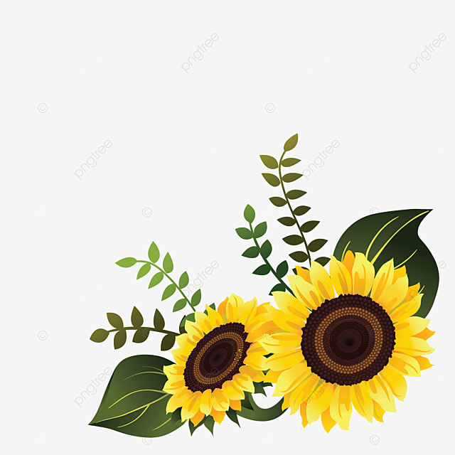 Sunflower Vector For Corner Design Floral Flower Spring