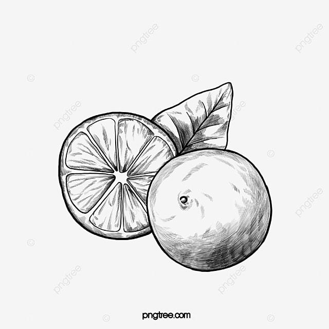 Gambar Buah Tumbuhan Hitam Dan Putih Lemon Hitam Dan Putih Tumbuhan Hitam Dan Putih Kilang Melukis Garis Png Dan Vektor Untuk Muat Turun Percuma