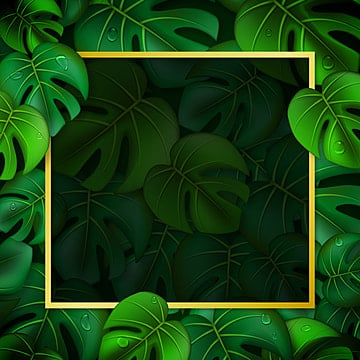 Free Download Set Of Botanical Vector Illustrations Of Tropical Palm Leaves In Png Images Leaf Palm Tropical Vector Arts Psd Files And Background