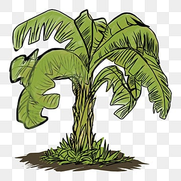 gambar vektor pohon pisang png vektor psd dan clipart dengan latar belakang transparan untuk download gratis pngtree https id pngtree com freepng vector image of a banana tree with a white background 5440259 html