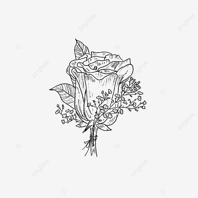 Sketsa Mawar Tunggal Hitam Dan Putih Mawar Bunga Sketsa Png Dan Vektor Dengan Latar Belakang Transparan Untuk Unduh Gratis