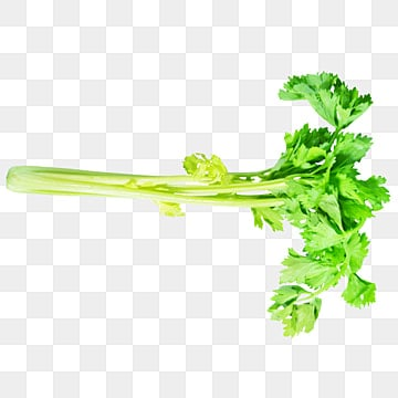 Celery Png Vector Psd And Clipart With Transparent Background For Free Download Pngtree