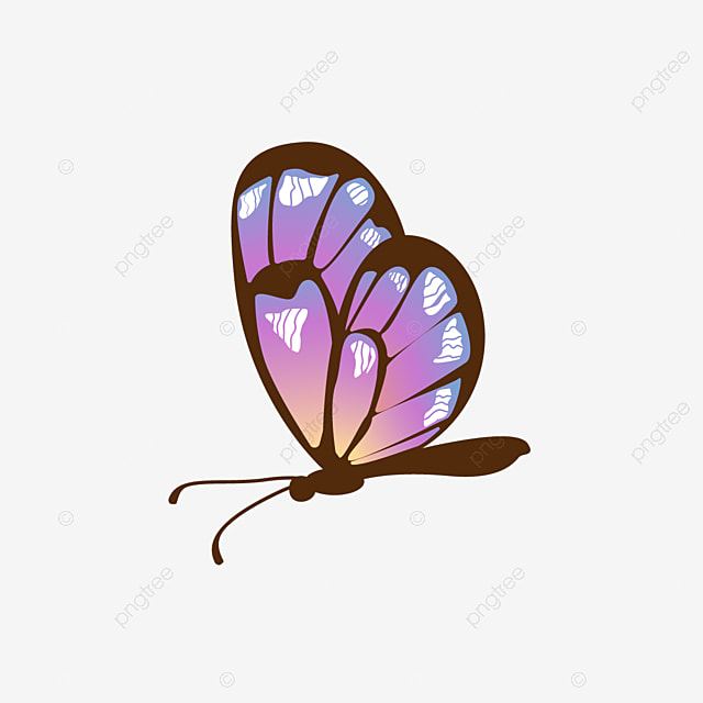color gradient butterfly clipart side, gradient butterfly, gradient,  colorful butterfly png and vector with transparent background for free  download  pngtree