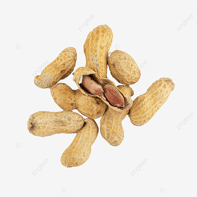 fruit photography illustration food peanut