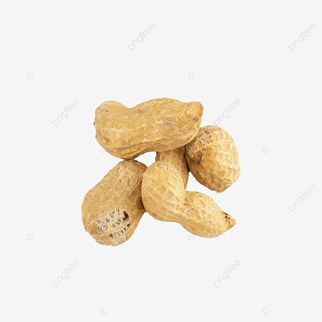 health photography illustration nut peanut