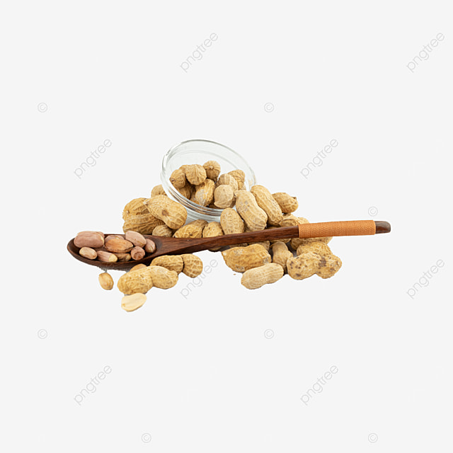 shell still life photography food peanuts