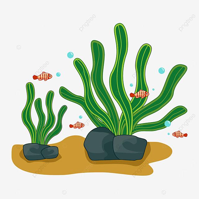 algae plant seaweed clip art