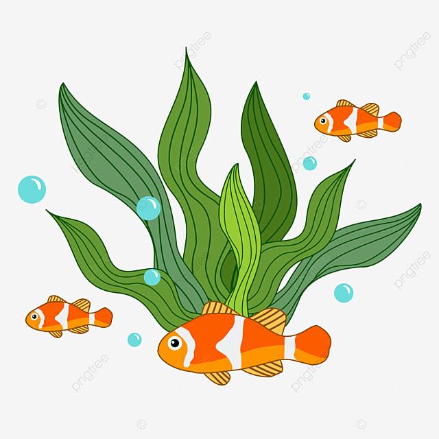 beautiful fish and seaweed clipart