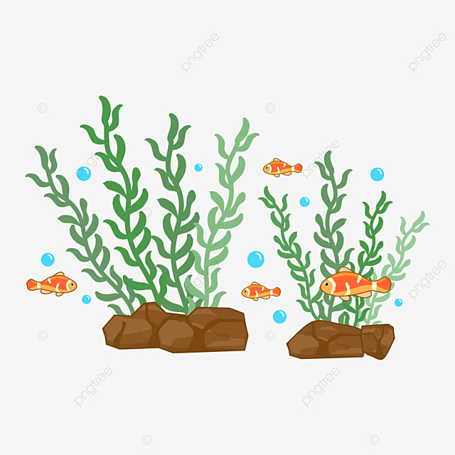 fish and seaweed clipart
