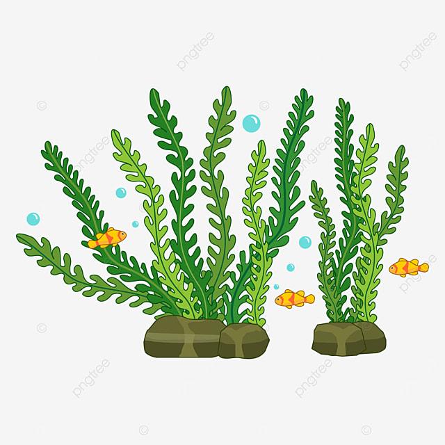 fish shuttle of seaweed clip art