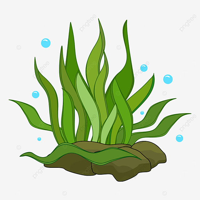 graceful banded seaweed clipart