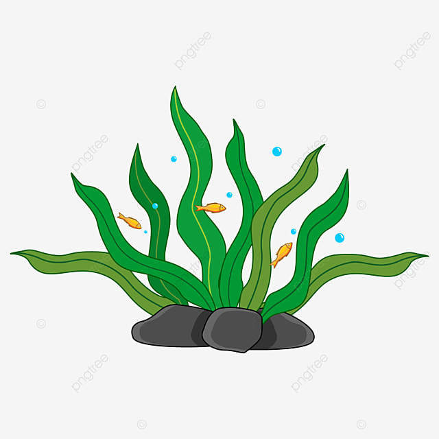 lively small fish and lush seaweed clipart