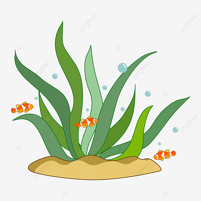 plant seaweed clipart