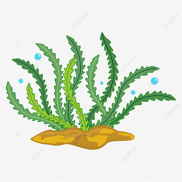 variety of seaweed clipart