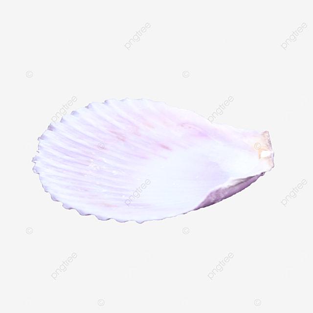 ornament marine shells