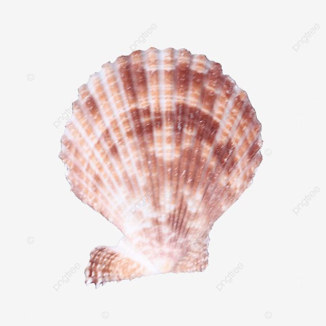 ornament pink seashell