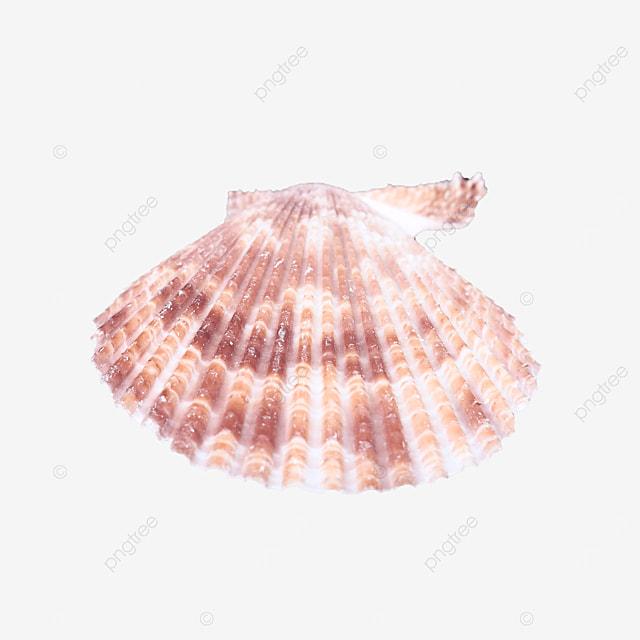 pink beach shells