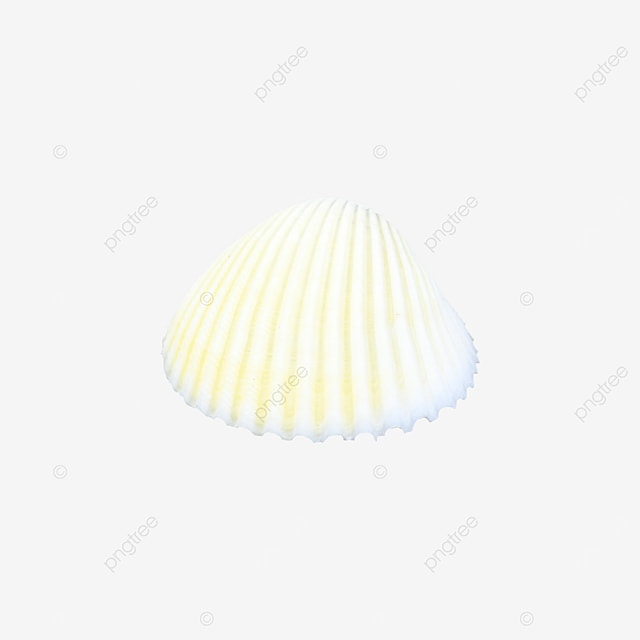 tropical shell decoration
