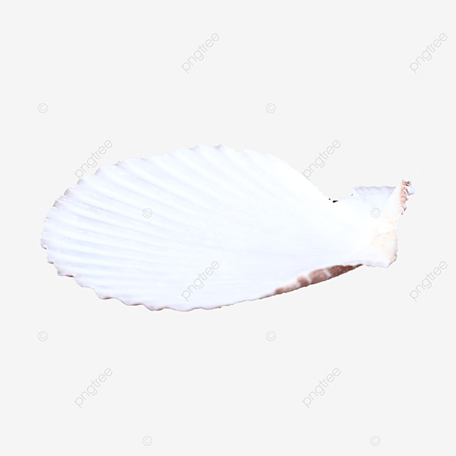white shellfish shell object