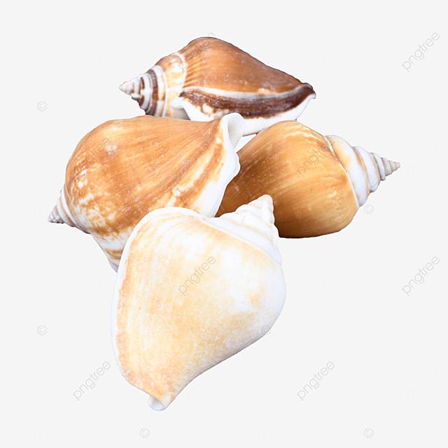 marine marine shell conch