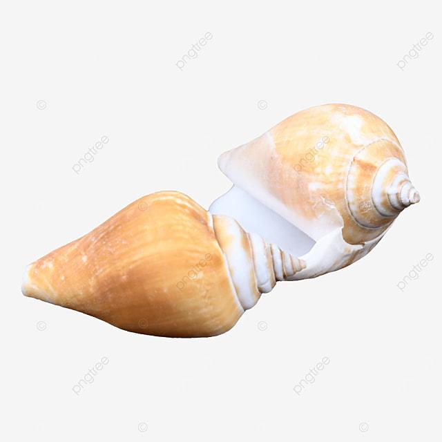 seafood animal beach conch