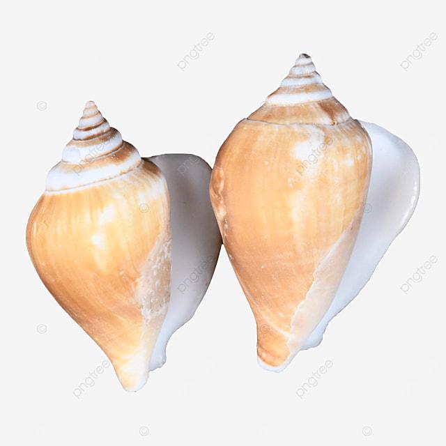 seafood seashore beach conch