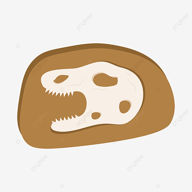 cartoon fossil clipart dinosaur skull clipart