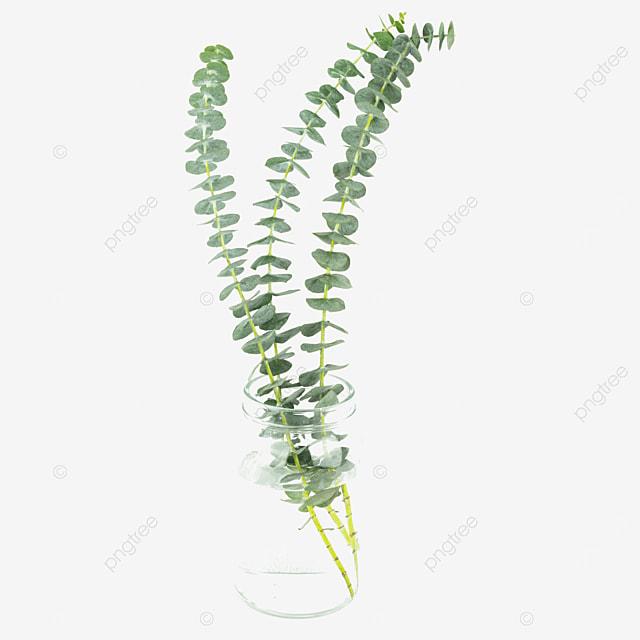 decorative eucalyptus green plant vase