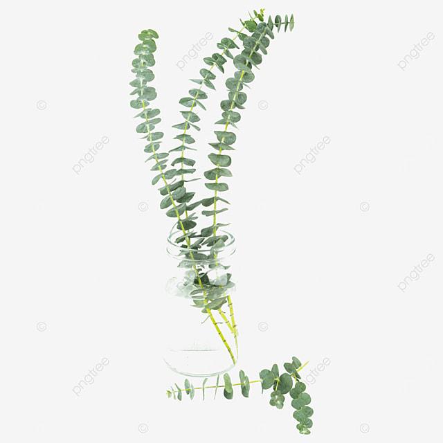 decorative eucalyptus vase with green plants
