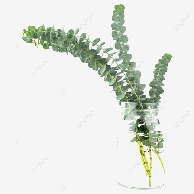 decorative vase with green plants eucalyptus