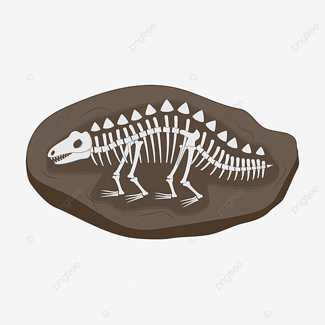 dinosaur skeleton fossil clip art