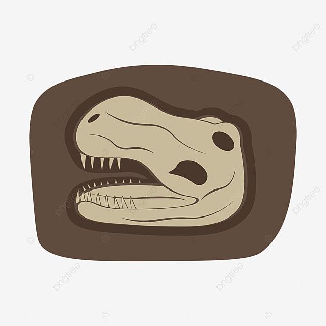 dinosaur skull cartoon fossil clipart