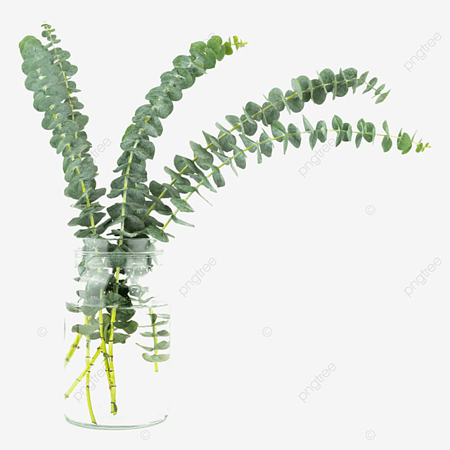 eucalyptus decorative green vase