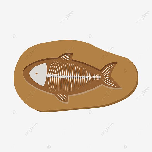 fossil clip art marine life fish bone fossil