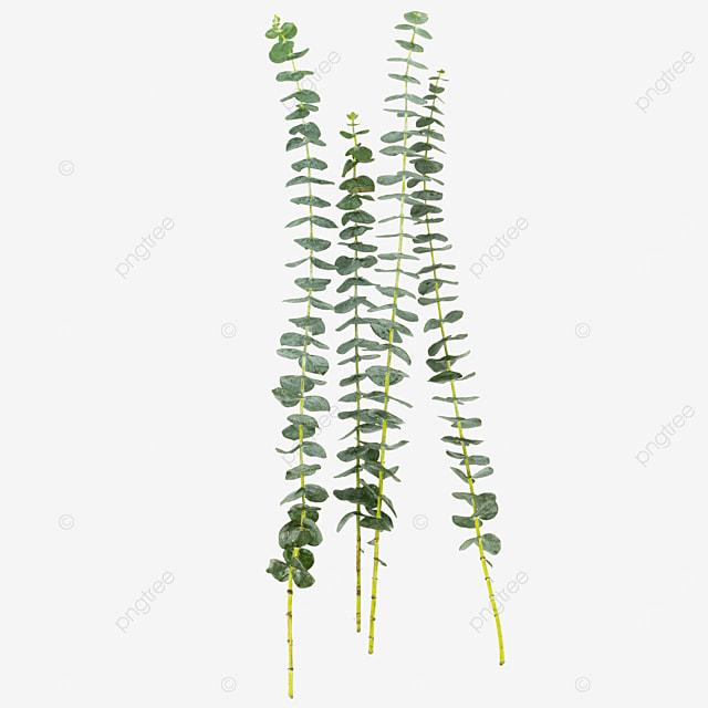 four green eucalyptus decorative plants