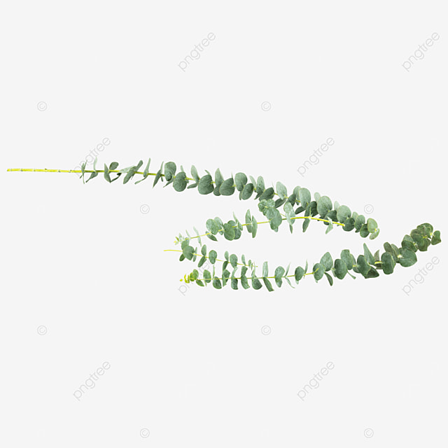 green plant eucalyptus green decoration