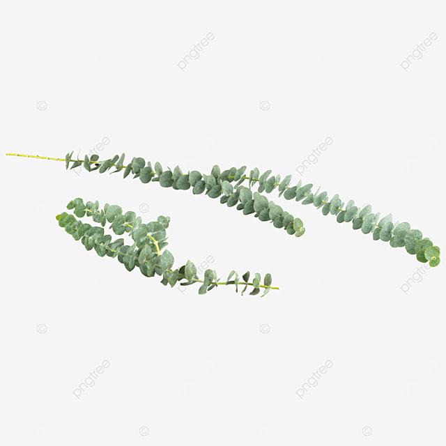 green plants green decoration eucalyptus