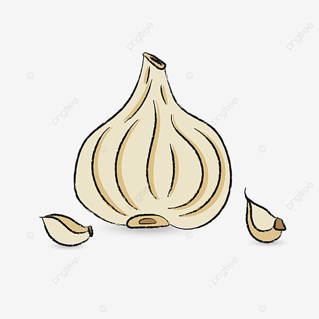 beige garlic clip art