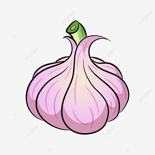 fresh garlic clipart