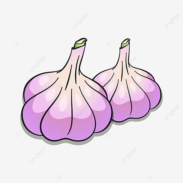 fresh purple garlic clipart