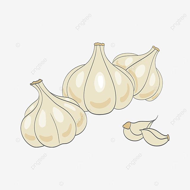 garlic clove garlic clip art