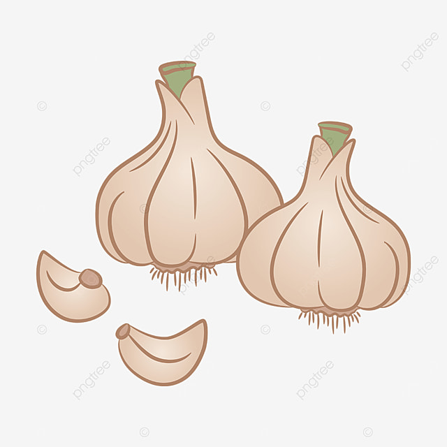 garlic with roots clipart