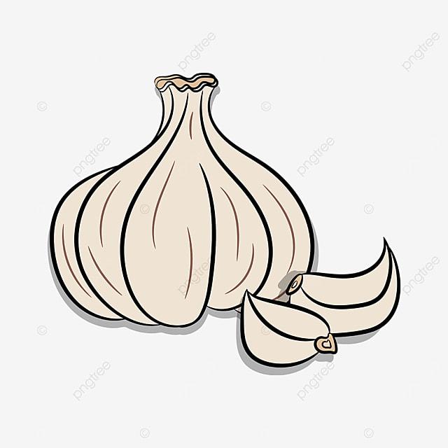 grey garlic clove garlic clip art